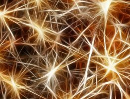 Nieuwe verklaring Fibromyalgie gevonden